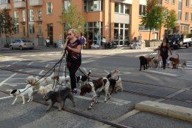 9764673922_dog_walkers_web_Celeste_Lindell
