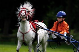 horse-1413604-1200