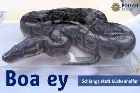boa-constrictor-polizei-web