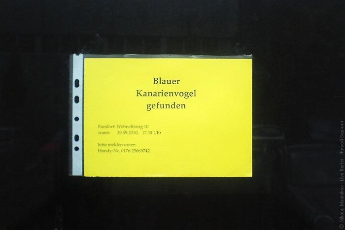 liveberlin-1838-blauer-kanarienvogel-gefunden