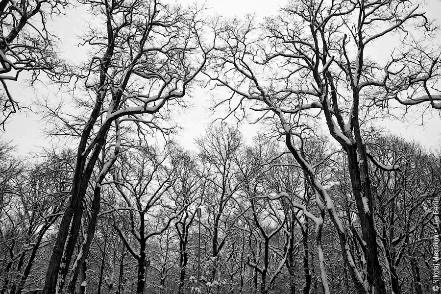 5. Чёрно-белая зима. Берлин. Сименсштадт