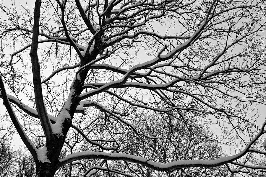 6. Чёрно-белая зима. Берлин. Сименсштадт