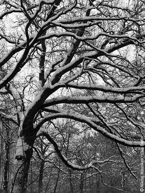7. Чёрно-белая зима. Берлин. Сименсштадт