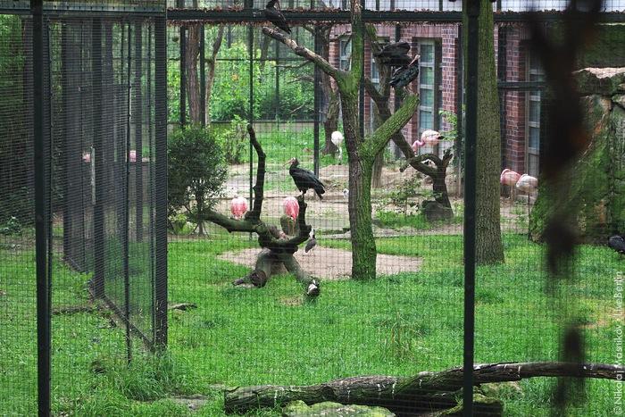 Берлинский зоопарк: демо-версия